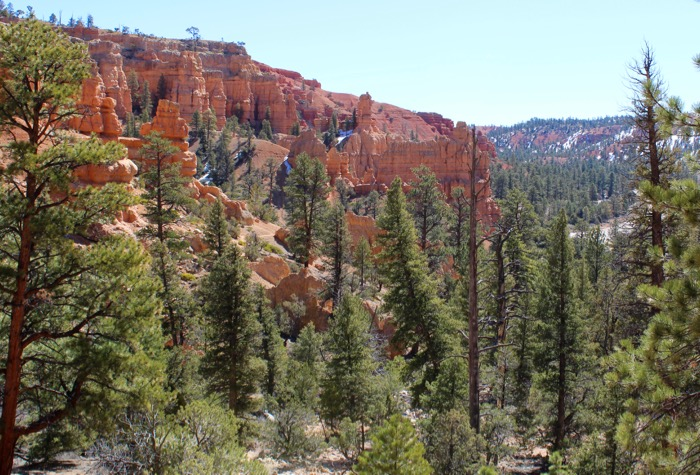 red canyon dixie nf