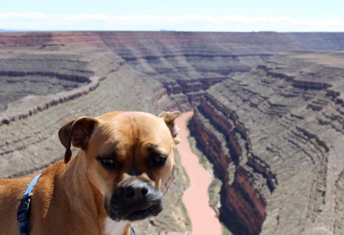 dog at goosenecks state park