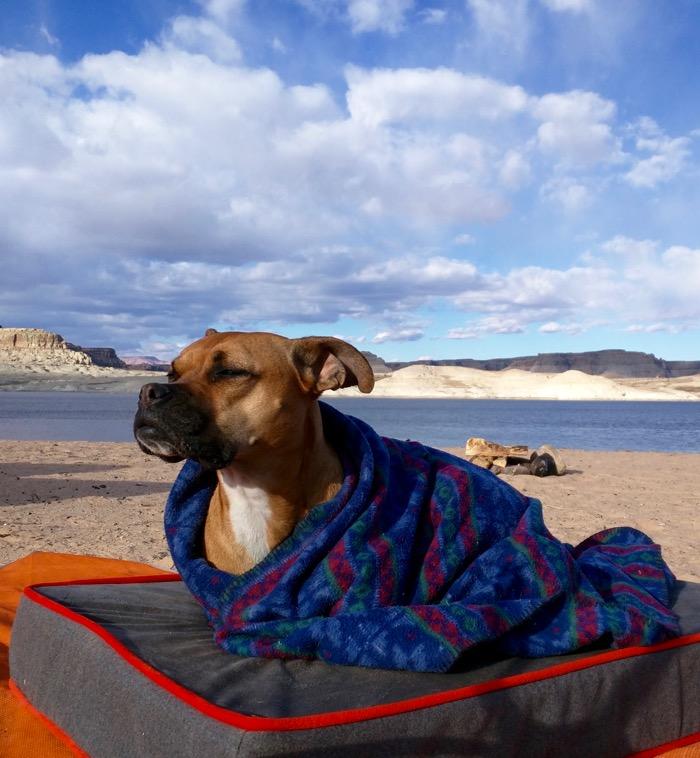 bugsy on the beach