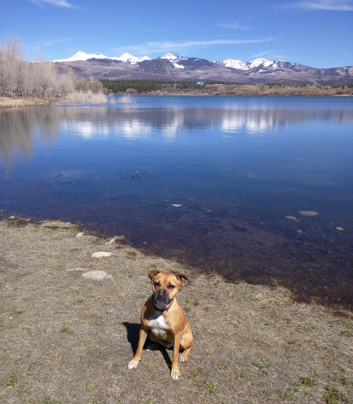 dog at mancos state park