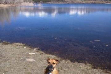 dog at mancos state park