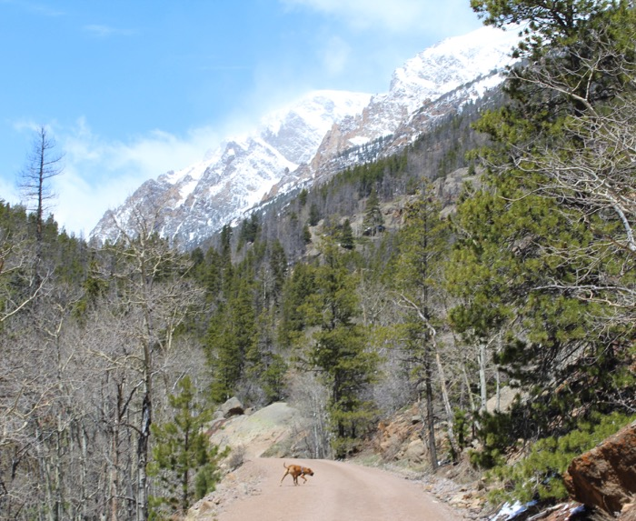 rocky mountain national park dog hike