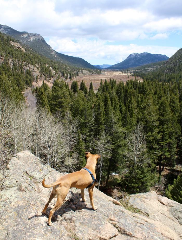 rocky mountain national park dog hike