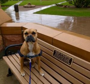 laramie matthew shepard bench dog