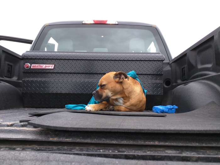 montrose ute trail sleeping dog