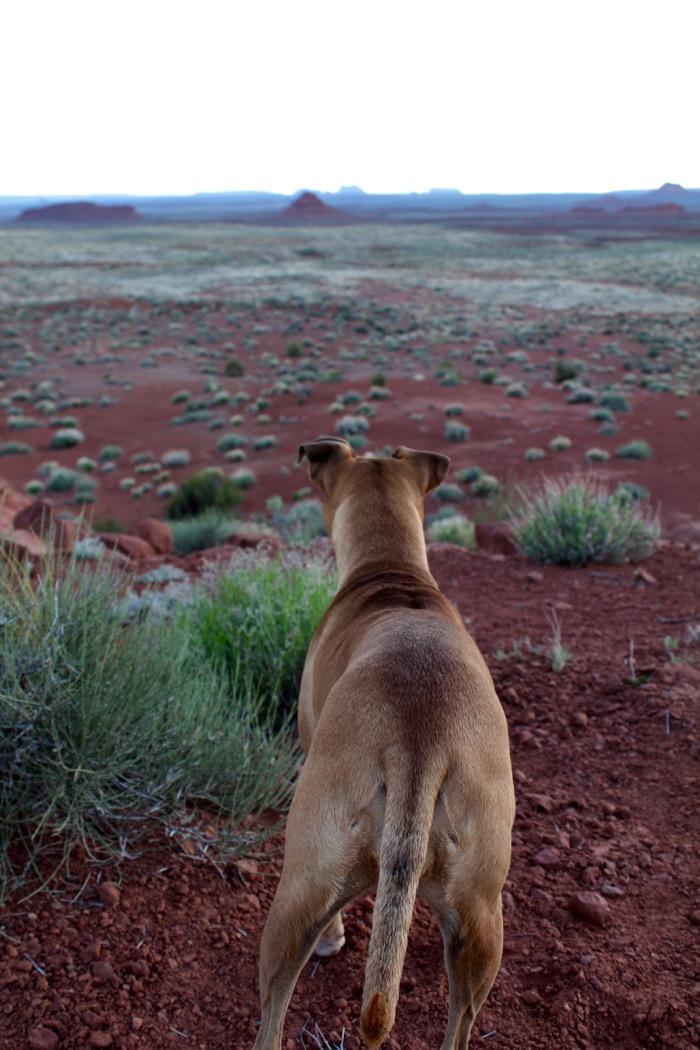 dog in valley of the gods utah
