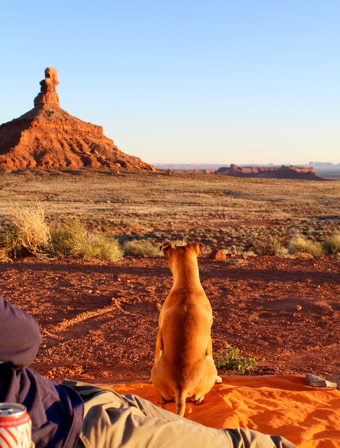 dog in valley of the gods utah