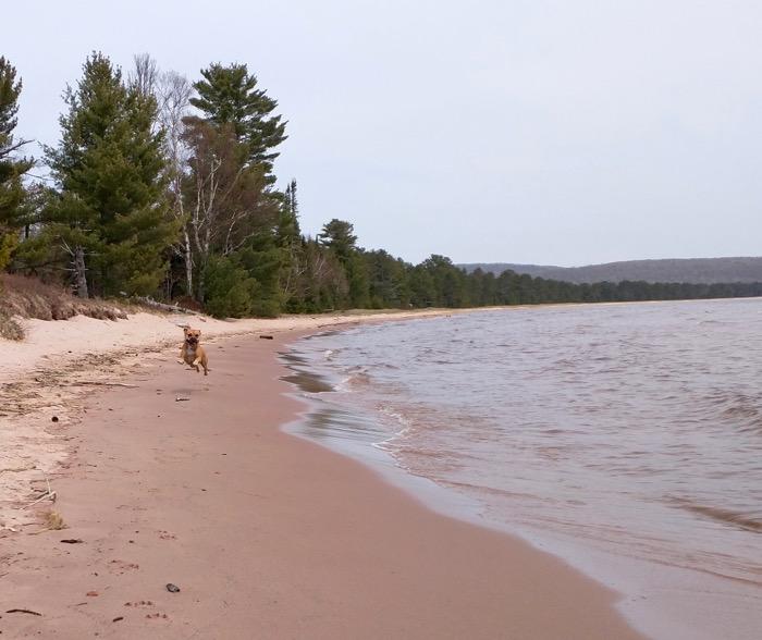 dog on shore of lake superior