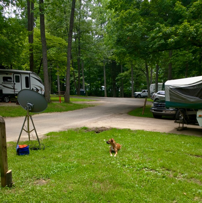 bugsy at my old kentucky home campground
