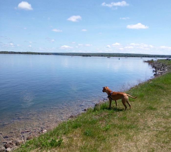 dog by st marys river
