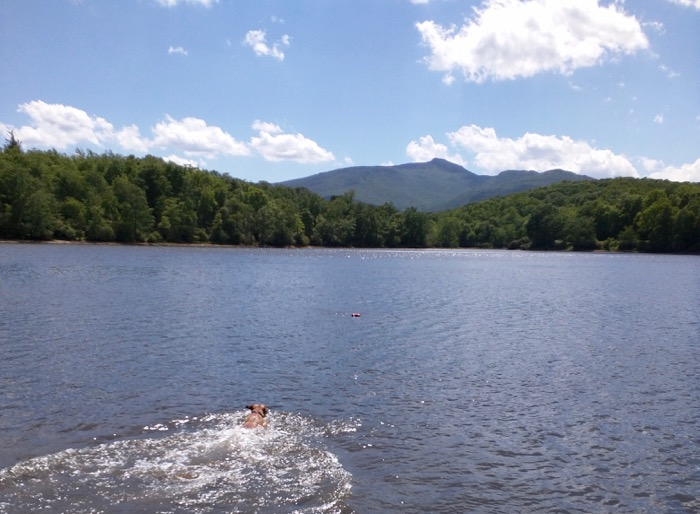 dog swimming in price lake blowing rock