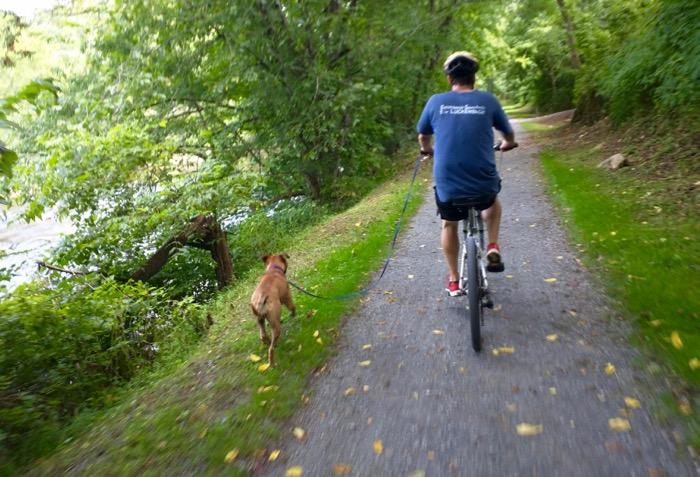 dog on virginia creeper bike trail