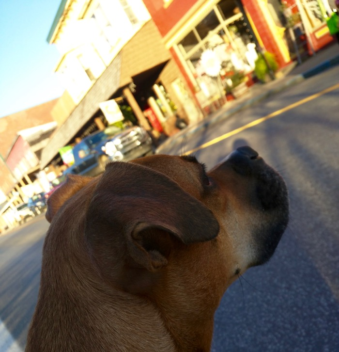 dog in downtown thomas wv