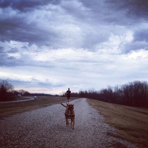 dog running big river trail