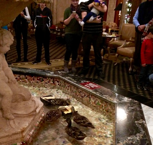 ducks at the peabody hotel
