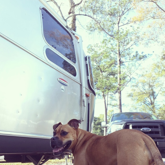 airstream dog!