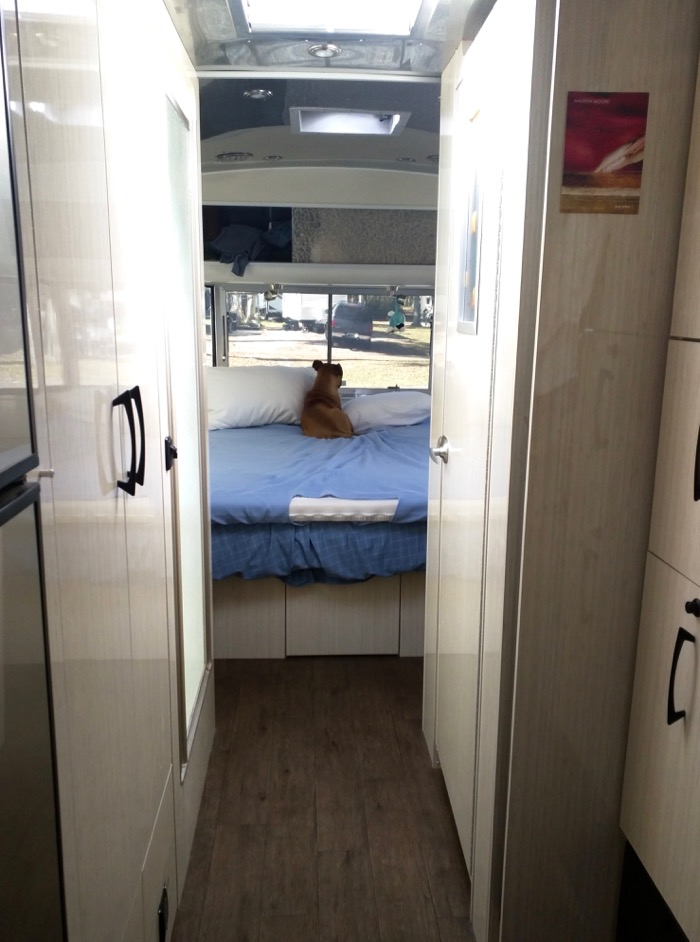 bugsy in the airstream