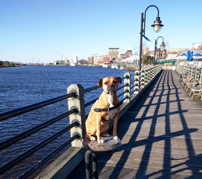 dog at wilmington riverwalk