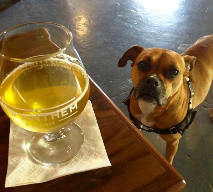 dog at anthem brewery
