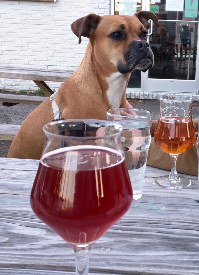 dog at flytrap brewing