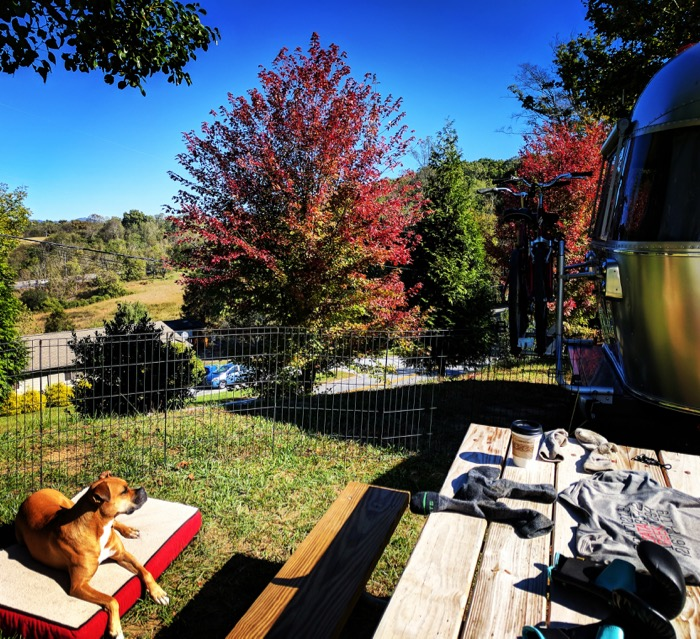 Bugsy in her new airstream yard