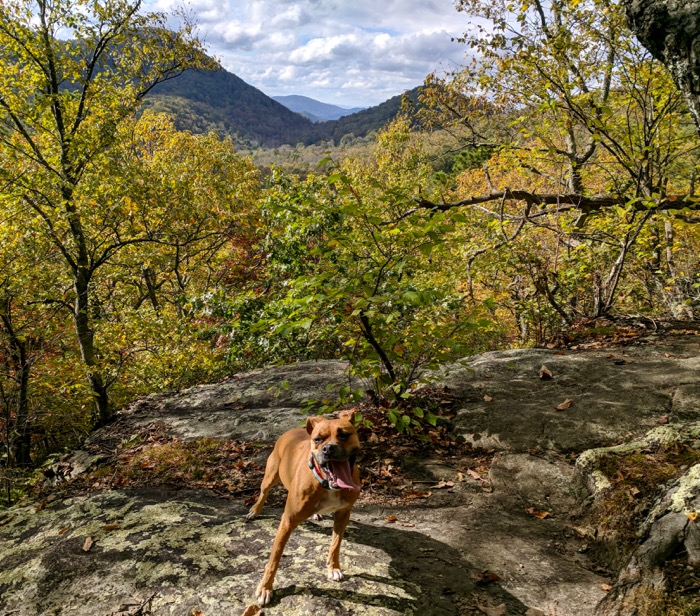 Bugsy at view in Florence Nature Preserve