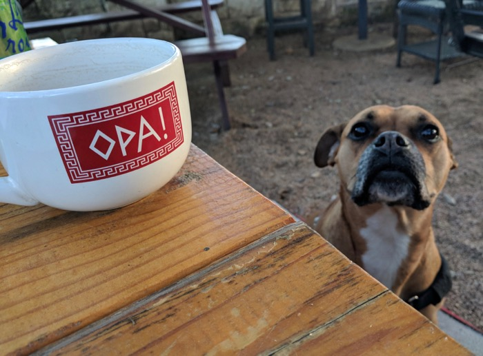 dog on patio at opa austin