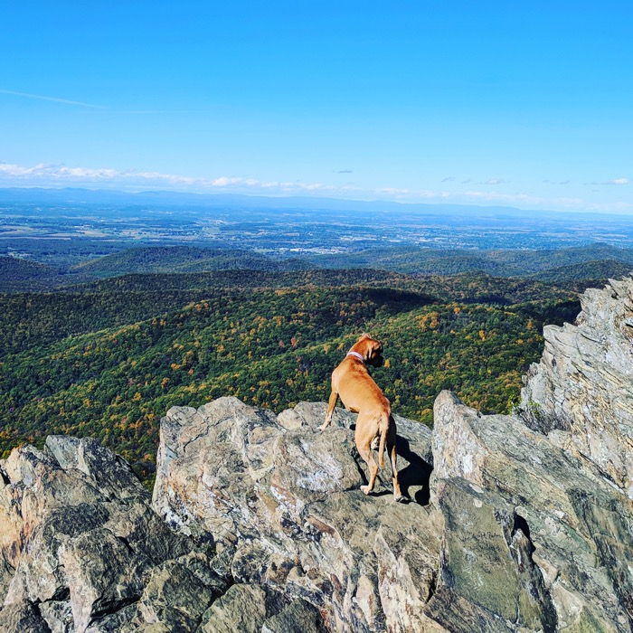 dog on humpback rock