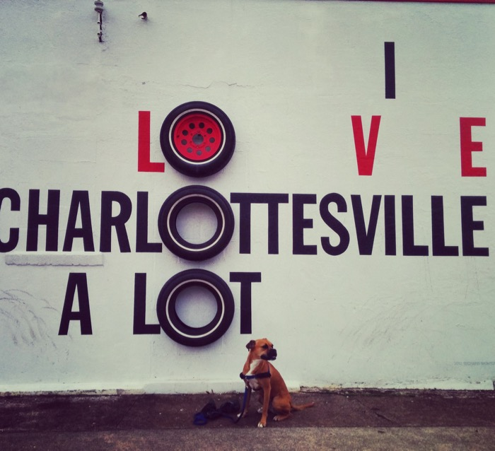 bugsy loves charlottesville