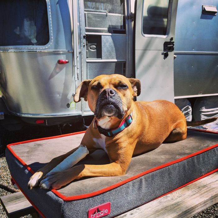 dog by airstream