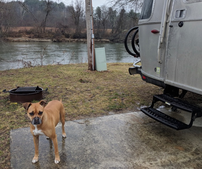 dog and her airstream wilson's riverfront RV park asheville