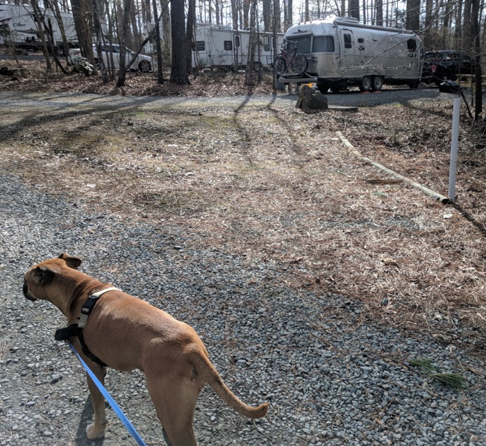 walking the dog by the airstream at Spring Hill Park in Chapel Hill