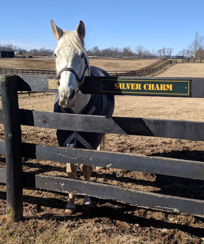 silver charm in his paddock
