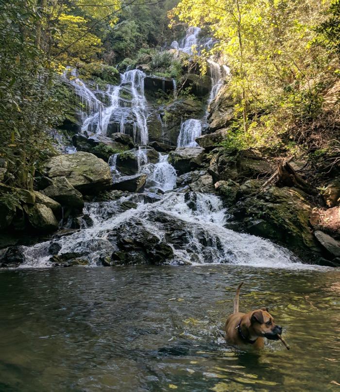 Bugsy swimming at Catawba Falls