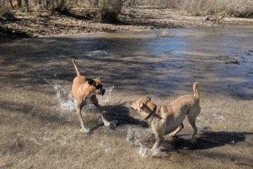 Dog-Off Leash Area at Cherry Creek State Park