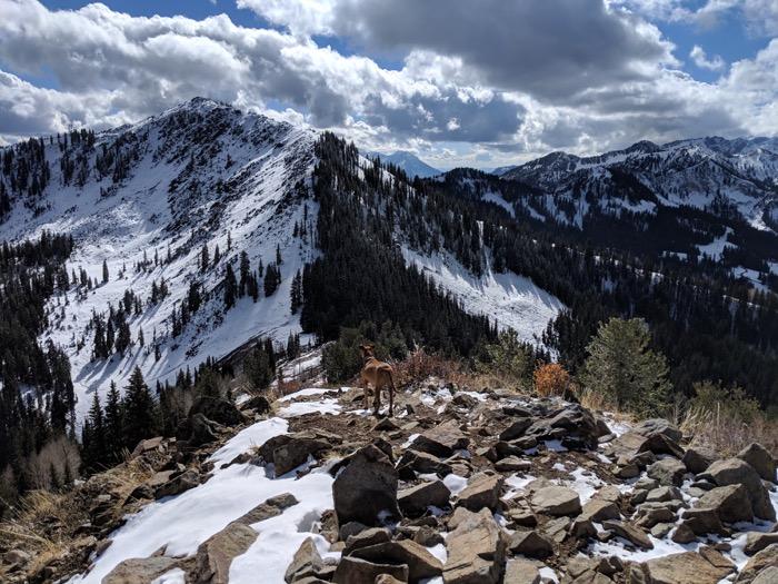 10420 Peak hike Utah