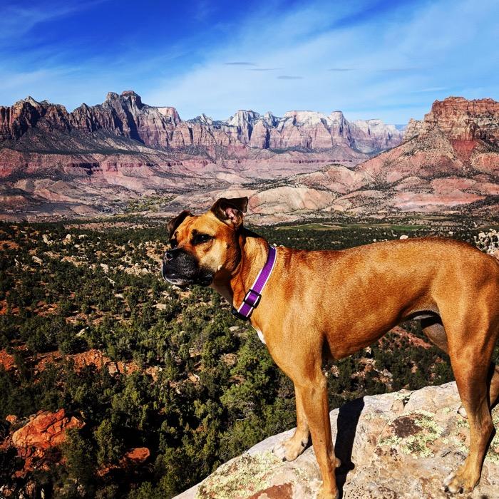 Eagle Crags hike vista