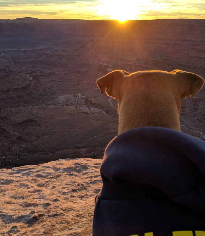 bugsy at sunset on the west rim, dead horse point
