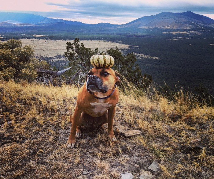 Bugsy with a gourd on her head