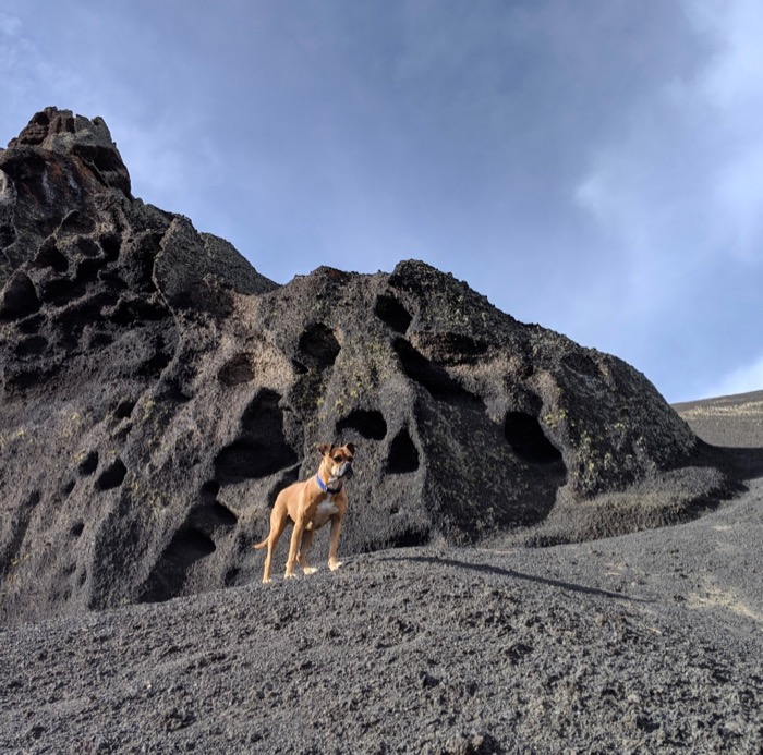 Bugsy climbing on cinder at Red Mountain Trail