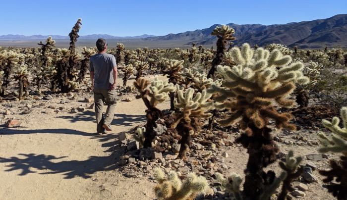 Cholla Garden at Joshua Tree