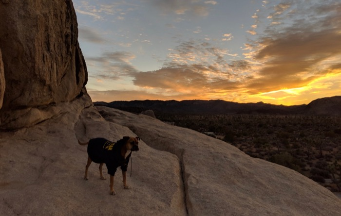 Bugsy at sunset on the boulders at Ryan Campground