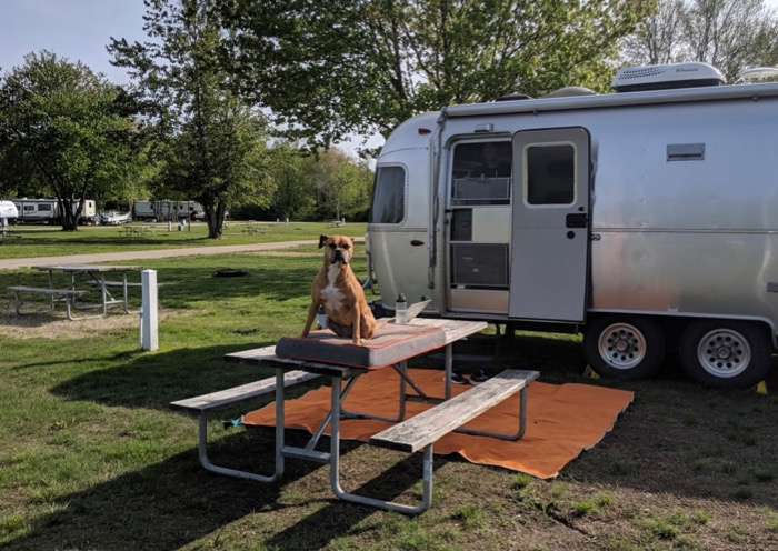bugsy at seaport campground in mystic