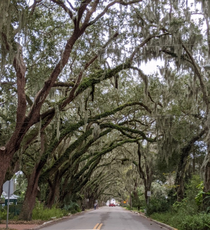 spanish moss streetscape near the Fountain of Youth