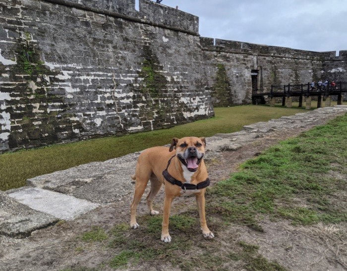 bugsy outside castillo san marcos
