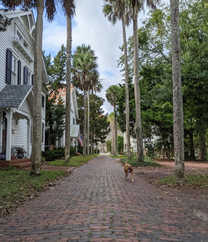 bugsy on a palm-lined alley in st augustine