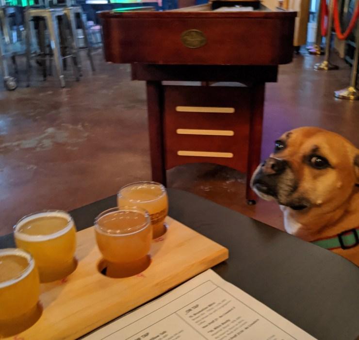 Beer flight at Zony Mash