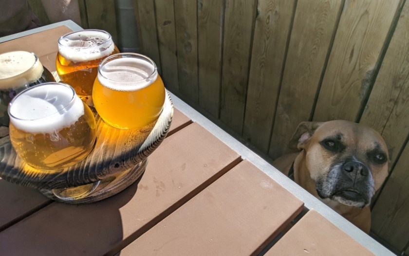 Bugsy and a beer flight at Triple Dog Brewing