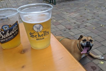 bugsy in the beer garden at Schell's