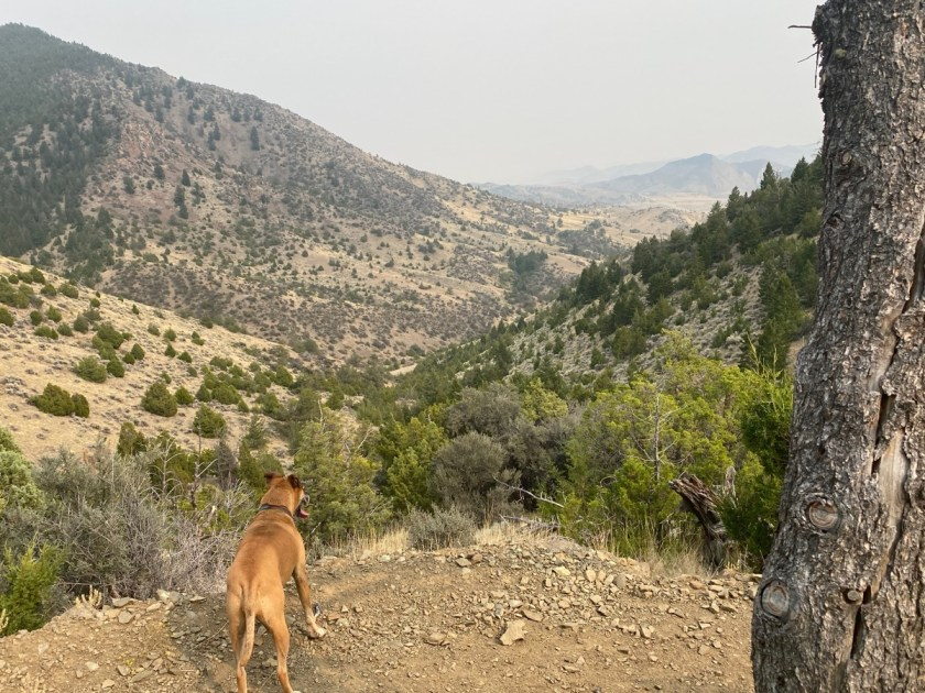 Bugsy hiking in Lewis and Clark Caverns State Park
